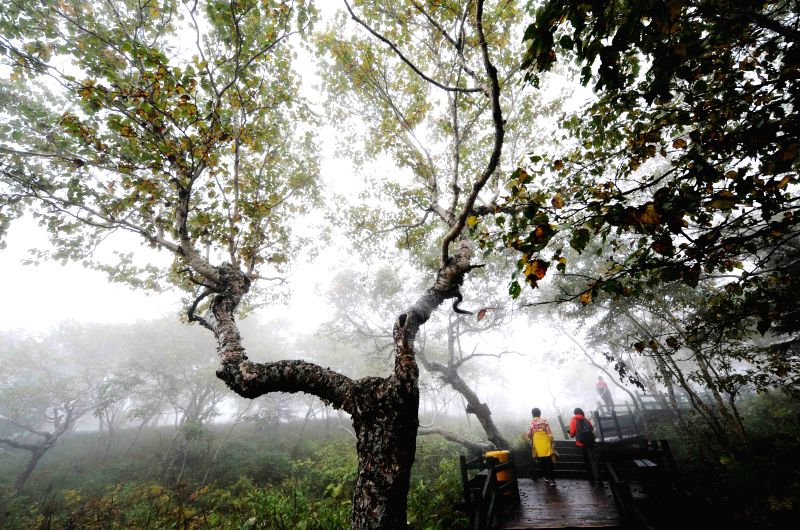 Visitors walk in the mist-covered Fenghuang Mountain in Wuchang, northeast China's Heilongjiang Province, Aug. 26, 2014.