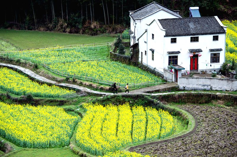 Rape flowers are in full bloom in Zuyuan Village of Xiuning County, east China's Anhui Privince, March 21, 2015.