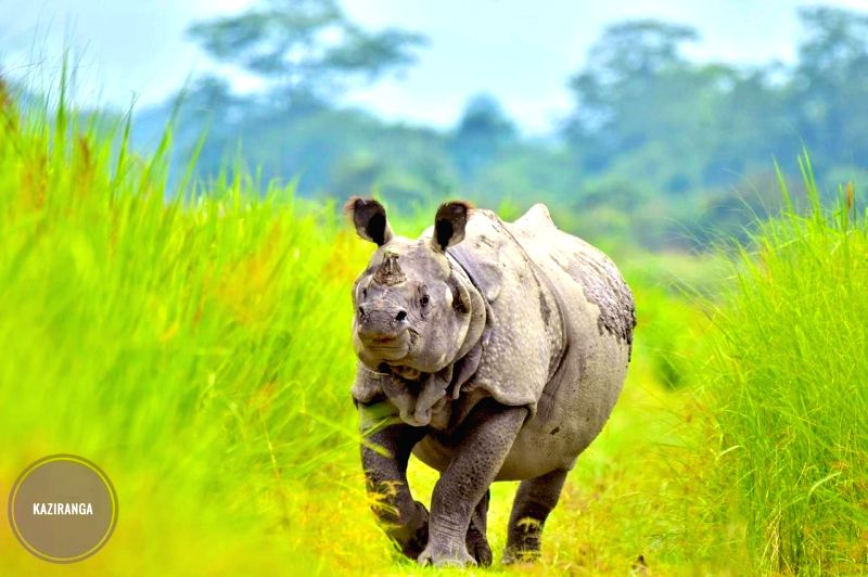 2,479 rhino horns, some ivory, animal parts to burn in Assam soon