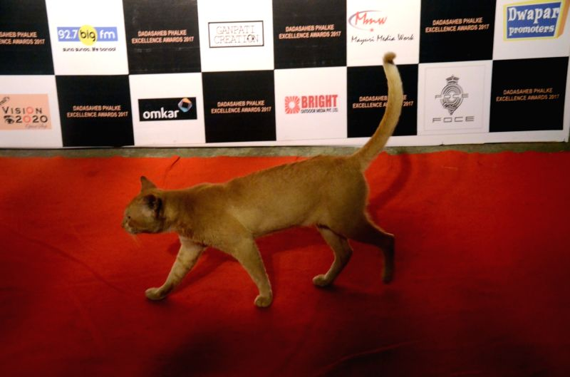 A cat invade on the Red Carpet of Dadasaheb Phalke award function in Mumbai on April 21, 2017.