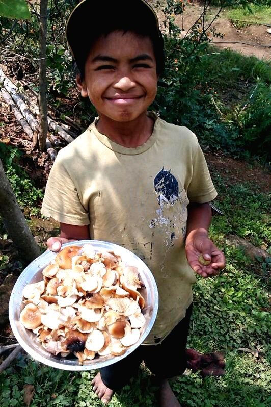 A child shows mushrooms collected from the forests of West Khasi Hills in Nongstoin of Meghalaya on May 4, 2014.