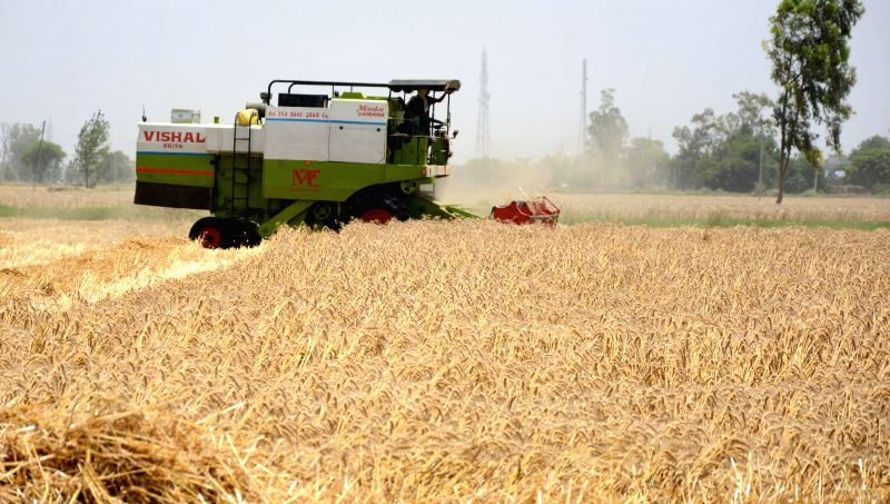 A combine harvester at work in a field of Amritsar on May 1, 2014.