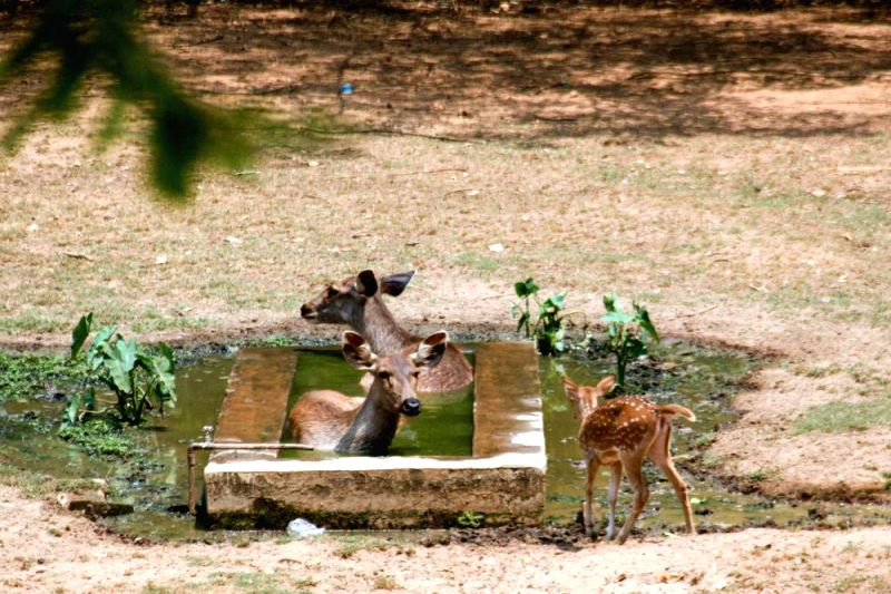 A deer sits in a tank inside its enclosure at Dhaka Zoo to beat the heat heat in Dhaka, Bangladesh on April 25, 2014.