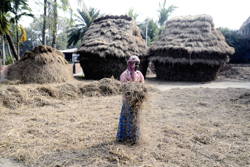 A farmer busy working at his agricultural field in Kolkata on Feb 1, 2018. In the Union Budget 2018-19, Finance Minister Arun Jaitley's focus was on rural India and agriculture, announcing a ... - Arun Jaitley