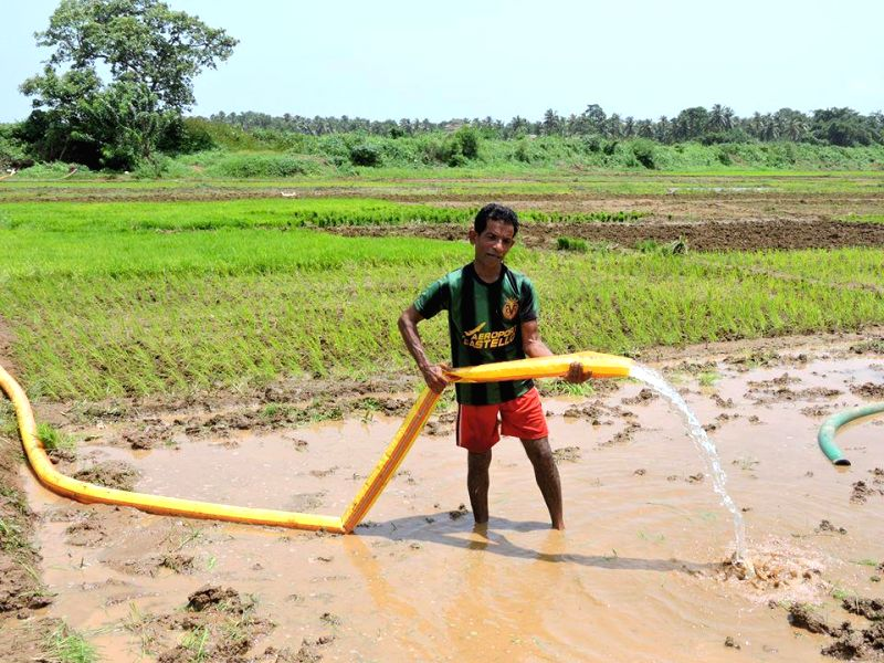 A farmer uses tanker to water his crops due to inadequate rainfall in Canacona, some 65 km away from Panaji on July 1, 2014.