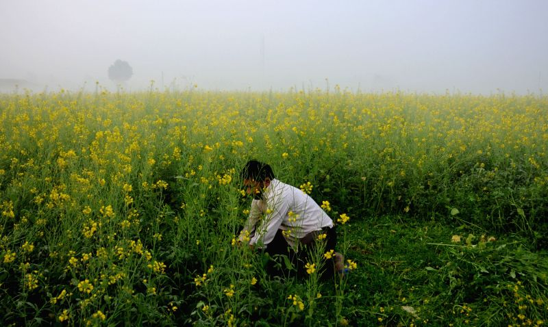 A farmer works on his fields on a foggy morning near Amritsar, on Dec 7, 2015.