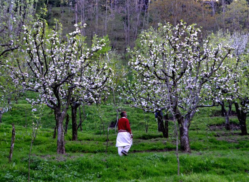 Kashmir in photos: Baramulla