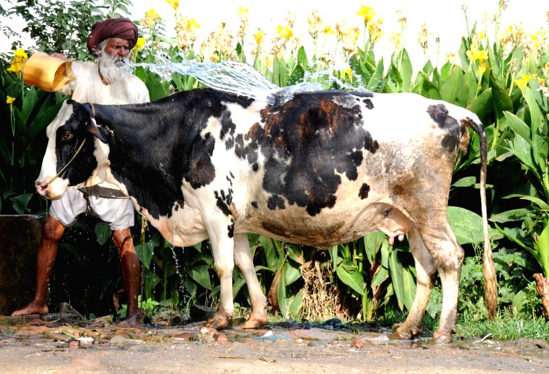 A man bathes his cow to beat the heat wave in Amritsar.