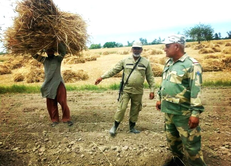 A Pakistani farmer carrying back a wheat sheave on his head from international border in presence of BSF and Pak Rangers personnel as strong winds blew the wheat sheaves into Indian territory ...