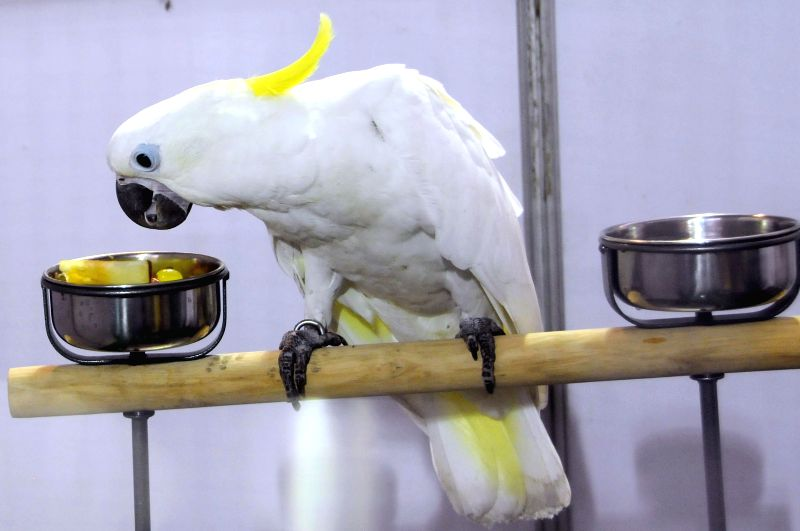 A parrot kept for display during Aqua Life 2014 exhibition at Freedom Park in Bangalore on April 18, 2014.
