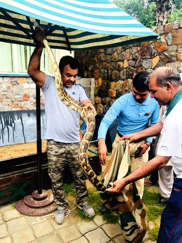 A Python rescued in Gurugram