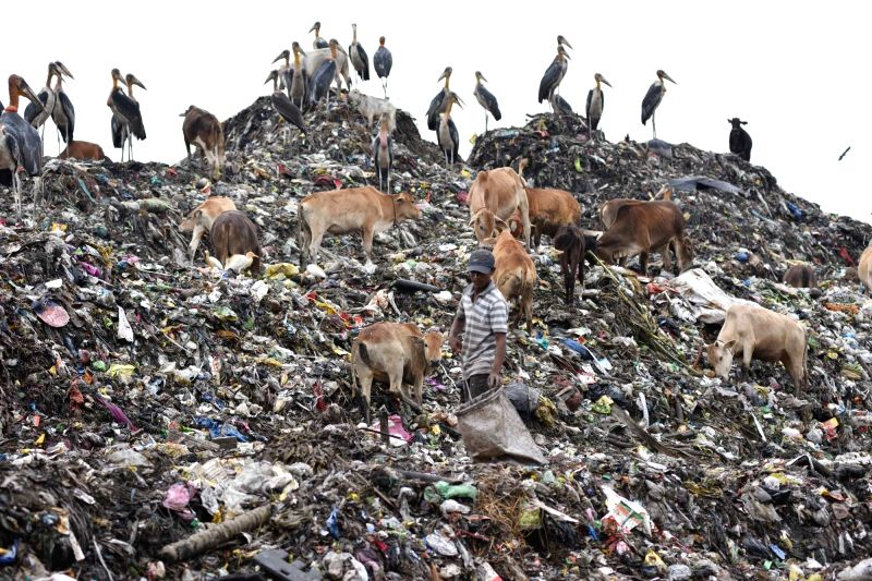 A rag-picker searches for recyclable material from a heap of garbage, at a  landfill site, in Guwahati on April 22, 2018. April 22 is observed as World Earth Day.