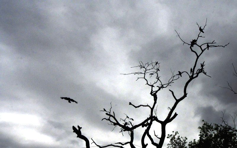 A silhouette of birds sitting on the branches of a leafless tree and an airplane flying past the cloudy skies, in Patna on July 24, 2018.