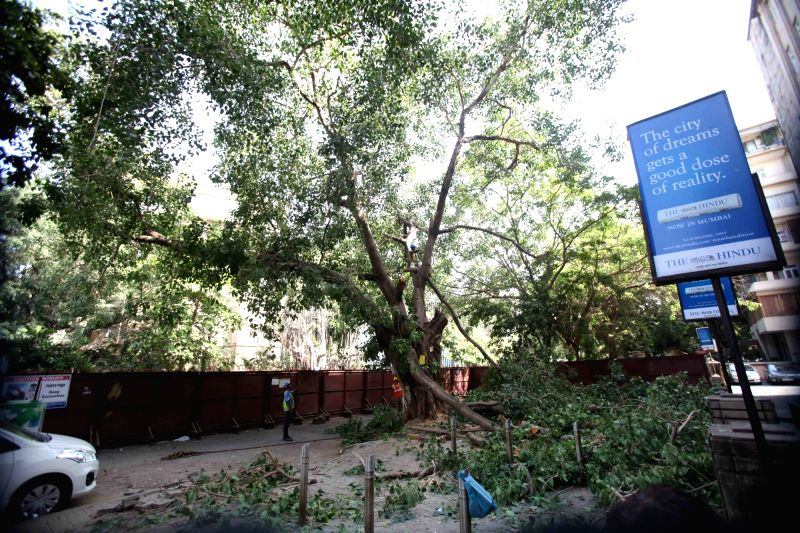 A tree being cut for Metro project at Churchgate in Mumbai on May 24, 2017.