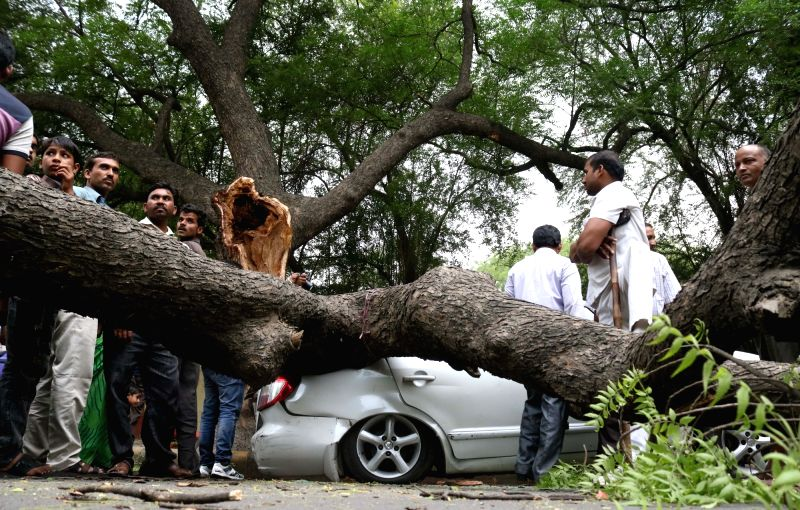 A tree falls on a car parked under it during a storm that hit New Delhi on May 3, 20117.