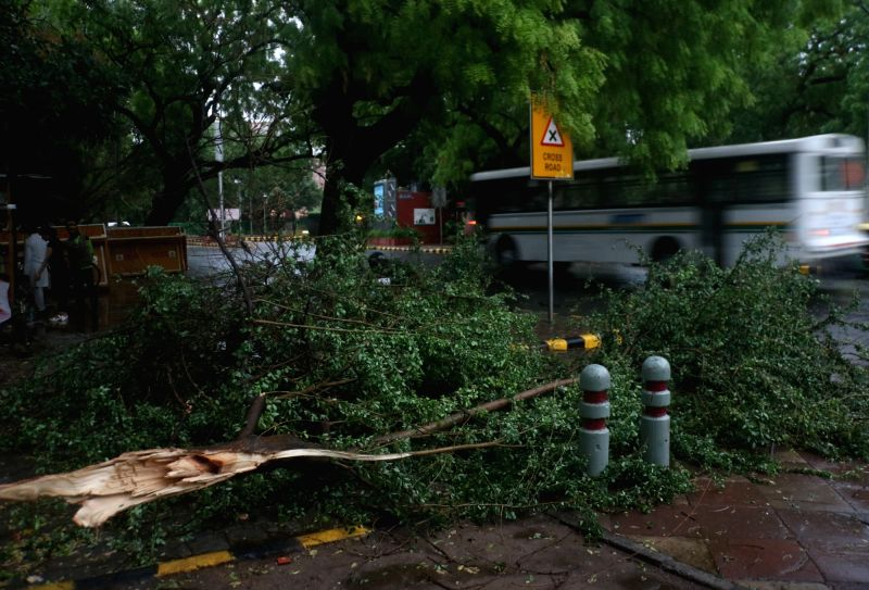 A tree uprooted during storm accompanied by rains, in New Delhi on June 9, 2018.