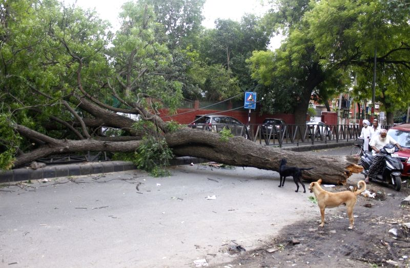 A tree which got uprooted in a thunderstorm that hit Gurugram, blocks a street, on May 16, 2018.
