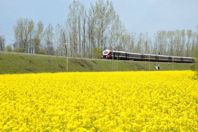 Kashmir in photos: A train passes by blooming mustard fields in Anantnag of Jammu and Kashmir.
