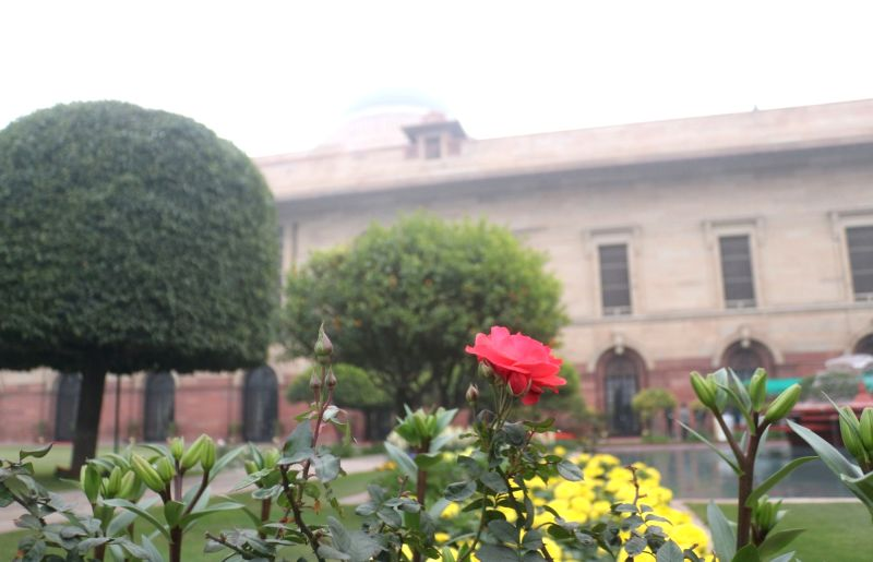 A view of a rose flower at the Mughal Gardens of Rashtrapati Bhavan during its press preview in New Delhi, on Feb 2, 2019.