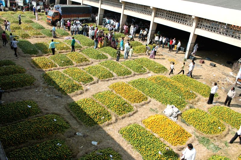A view of Kalmana wholesale market in Nagpur on Nov 21, 2015. Bumper crop produce of oranges results in the fall of prices.