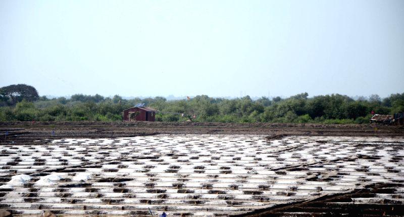 A view of natural salt pans (File Photo)(Image Source: IANS)