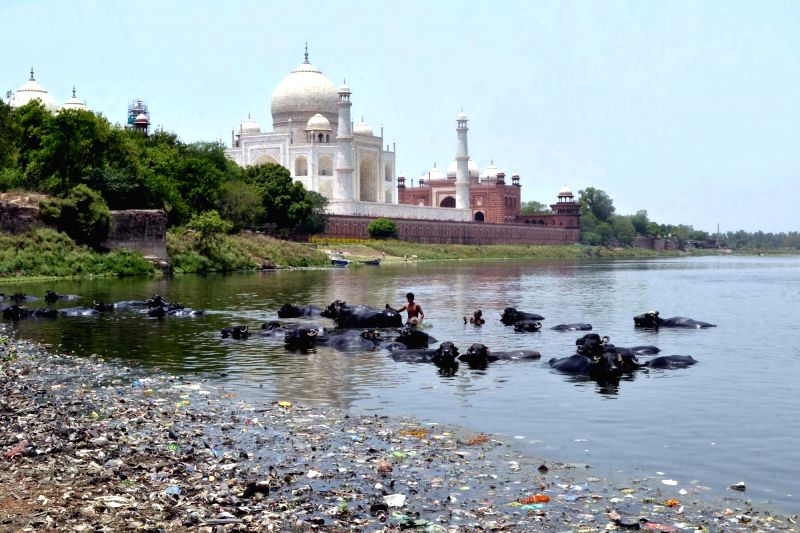 A view of polluted Yamuna river flowing by the Taj Mahal in Agra on June 5, 2017.