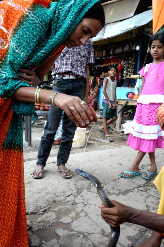 A woman offers milk to a cobra on Naga Panchami in Ranchi  on August 1, 2014.