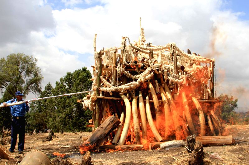 Photo taken on March 20, 2015 shows the elephant tusks, ivory trinkets and carvings set aflamed on a wooden pyre in Addis Ababa, capital of Ethiopia. Ethiopian ...