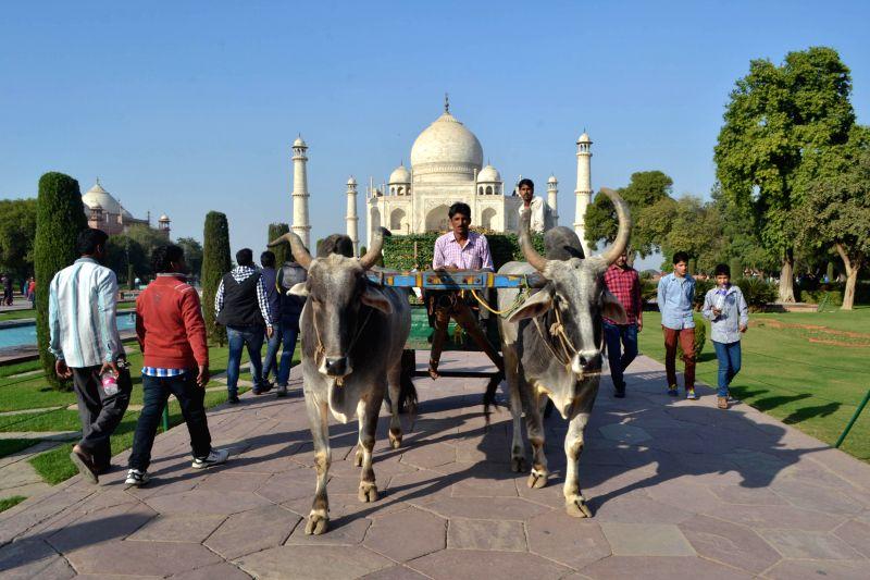 A bullock cart at the Taj Mahal in Agra, on Dec 7, 2014.