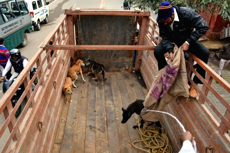Stray dogs being captured from the vicinity of the Taj Mahal as US President Barack Obama is expected to visit Agra on 27th January 2015, on Jan 19, 2015. (Photo : Pawan Sharma/IANS) - Pawan Sharma