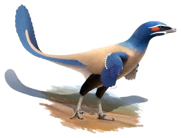 New bird-like species of dinosaur identified ()