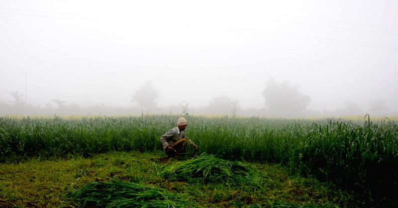 A farmer works on his field on a cold day, in the outskirts of Amritsar on Dec 22, 2014.