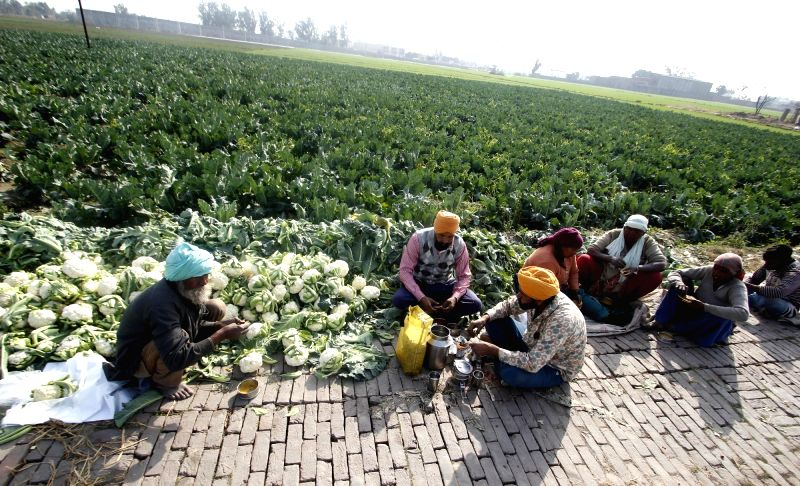 Amritsar: Farmers have their lunch besides a cauliflower field in Amritsar on Feb 1, 2018. In the Union Budget 2018-19, Finance Minister Arun Jaitley's focus was on rural India and agriculture, announcing a number of schemes and incentives. For the K