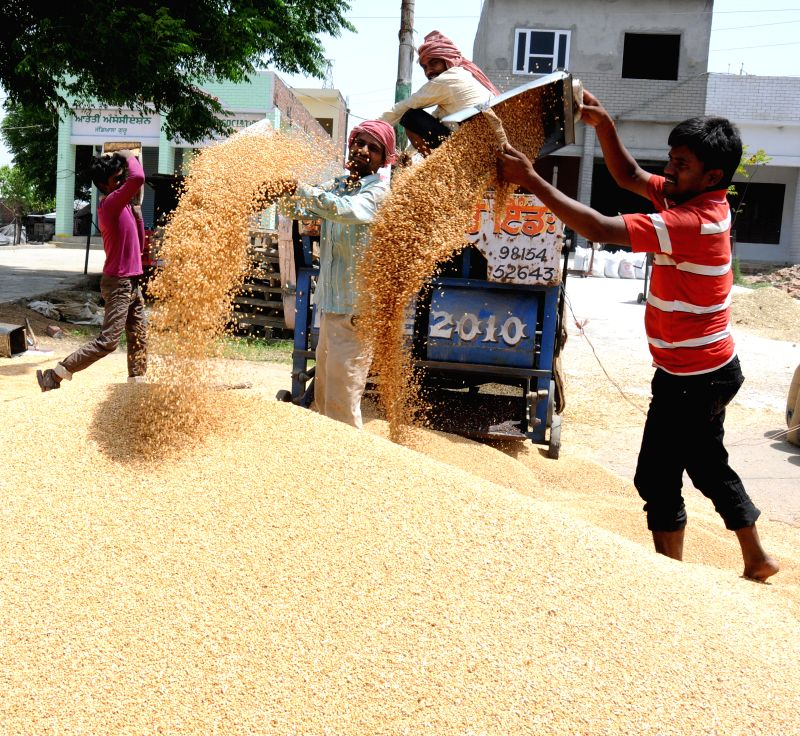 Labourers busy stocking grains at a grain market on the outskirts of Amritsar on April 21, 2015.