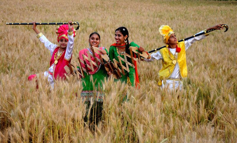 People celebrate in the fields of Punjab on the eve of Baisakhi  on April 12, 2015.