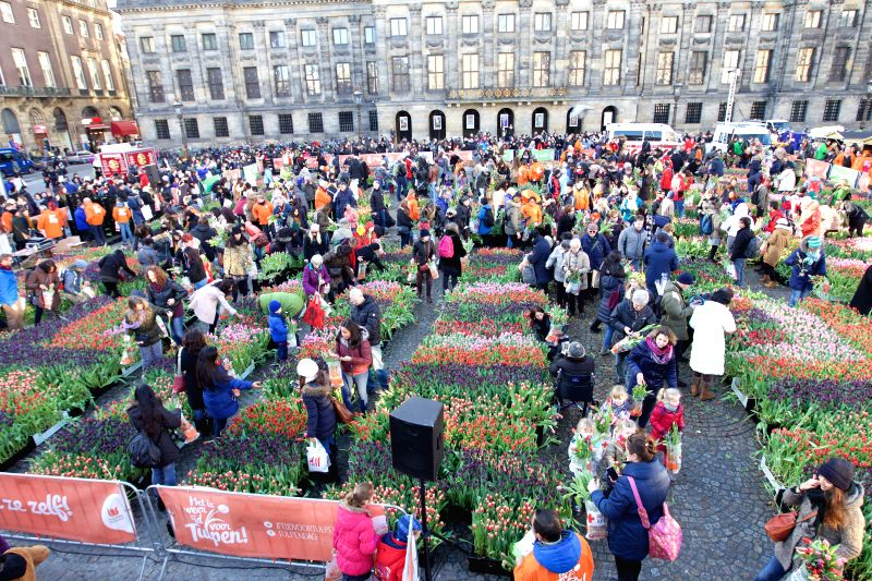 People pick tulips during the Netherlands' National Tulip Day in Amsterdam, capital of the Netherlands, on Jan. 17, 2015. The Netherlands' National Tulip Day was .