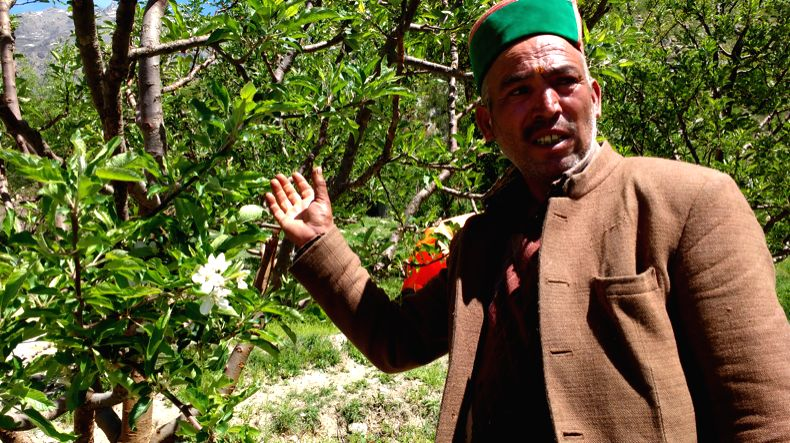 An apple farmer showing his tree