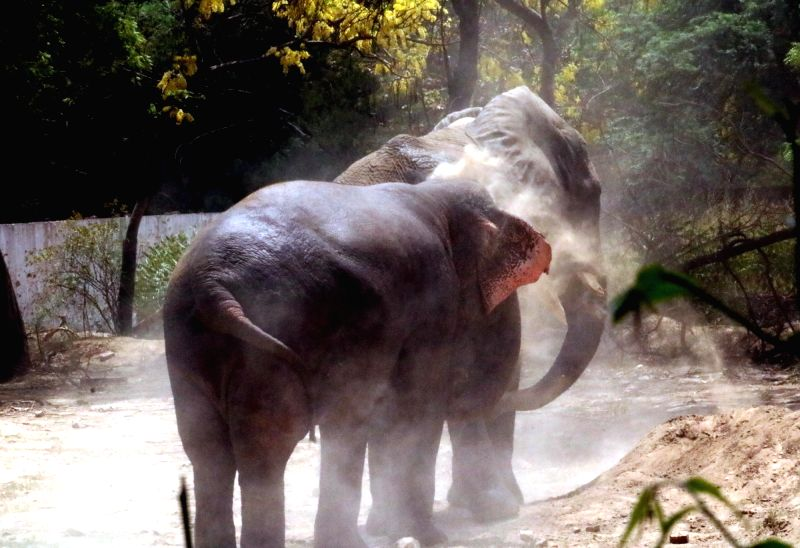 An elephant beats the heat on a hot day at Delhi zoo on May 22, 2016.