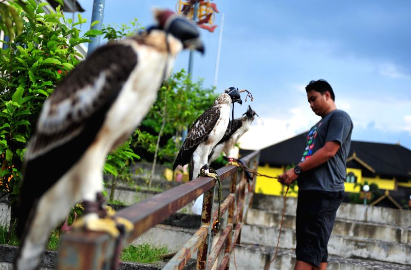 An Indonesian man from the community of bird lovers prepares to train an eagle in Pontianak, West Borneo Province, Indonesia, June 27, 2015. ...