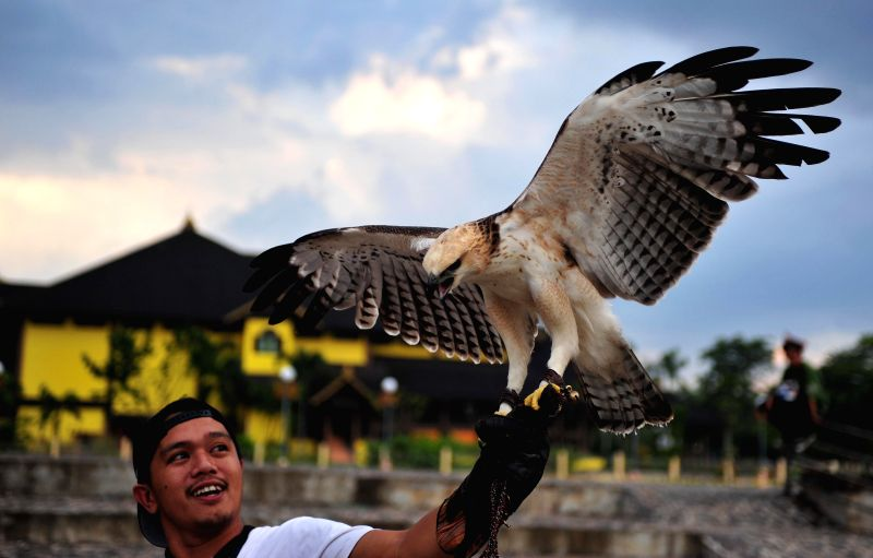 An Indonesian man from the community of bird lovers trains an eagle in Pontianak, West Borneo Province, Indonesia, June 27, 2015.