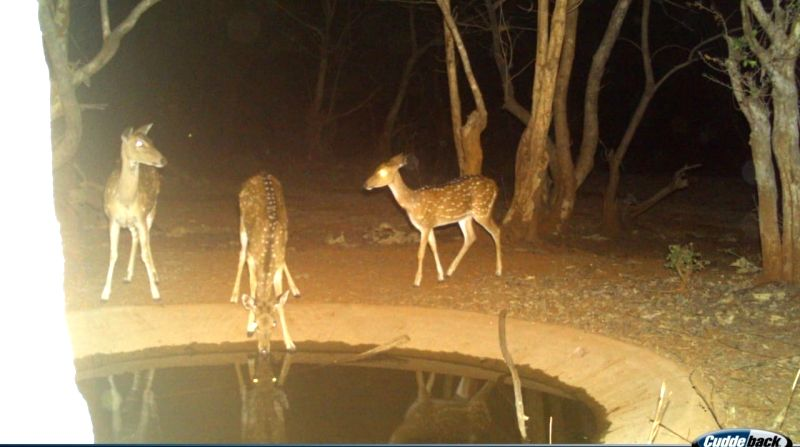 Animals in Telangana forests flock to saucer pits to quench thirst