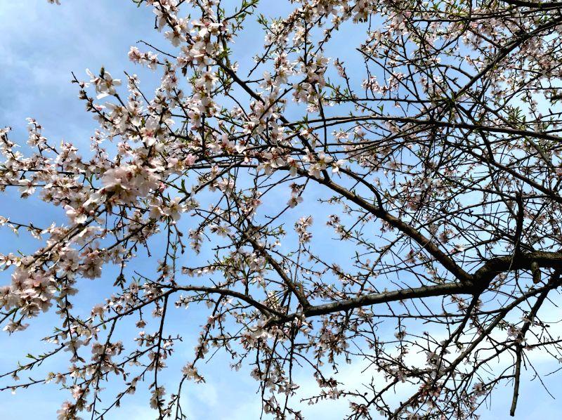 Article : The Kashmiri Spring.