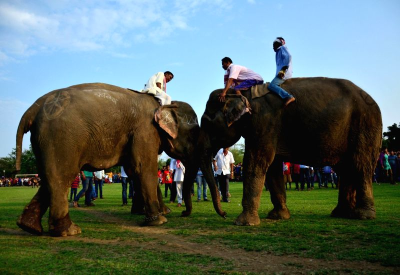 Asiatic elephants and their mahout -trainer- participate in an elephant fight during Suwori festival in Boko, 70 kms away from Guwahati on April 21, 2017.