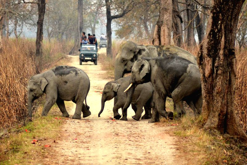 A herd of elephant at the Kaziranga National Park in Assam, on March 3, 2015.