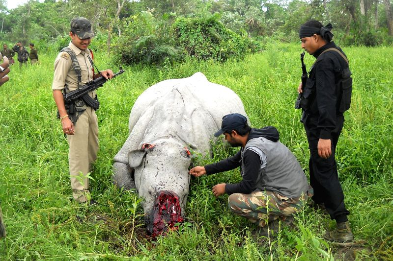 The carcass of one-horned rhino that was killed by poachers in Assam's Kaziranga national park on April 10, 2015.
