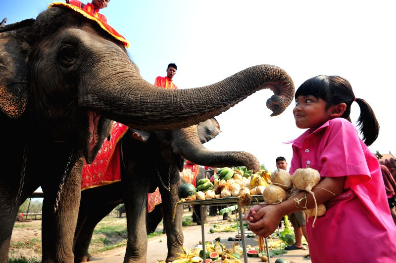 AYUTTHAYA, March 13, 2018 - A kid feeds an Asian elephant with fruits during an elephant buffet marking the Thai National Elephant Day in Ayutthaya, Thailand, March 13, 2018. Thailand observed its ...