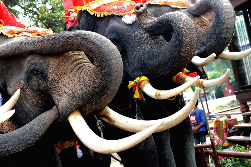 AYUTTHAYA, March 13, 2018 - Asian elephants stand before an elephant buffet marking the Thai National Elephant Day in Ayutthaya, Thailand, March 13, 2018. Thailand observed its annual National ...