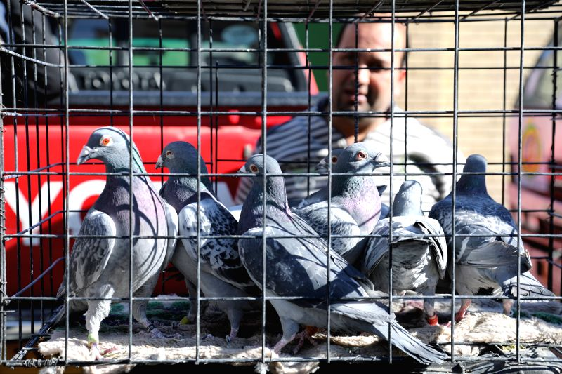 BAGHDAD, Feb. 2, 2018 - People watch pigeons in al-Ghazil Market in Baghdad, Iraq on Feb. 2, 2017. Pet-lovers from around Iraq gather in al-Ghazil Market in Baghdad on Friday. With a history of about ...
