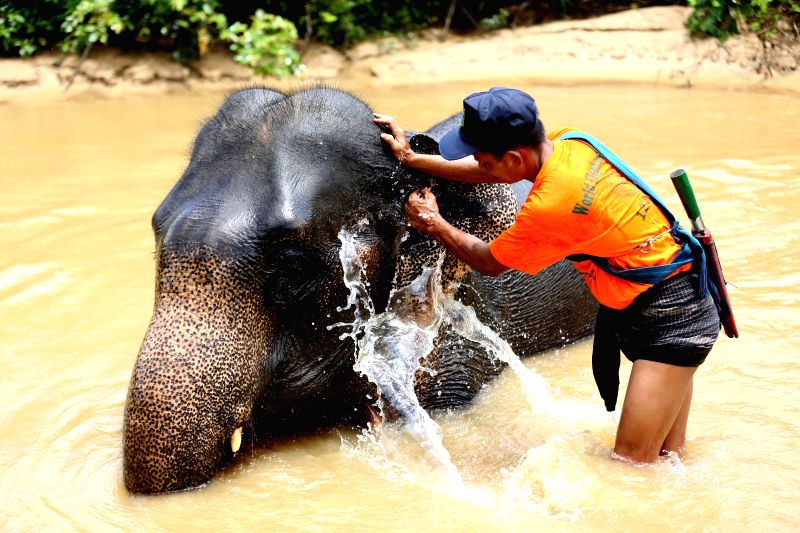 BAGO, Aug. 12, 2018 - An Elephant keeper helps an elephants to bathe in the water at the Wingabaw Elephant Camp on World Elephant Day in Bago Region, Myanmar, Aug. 12, 2018.