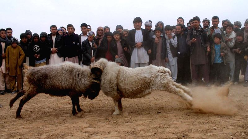 Balkh (Afghanistan): Afghans watch traditional ram-fighting in Balkh province, north Afghanistan, Nov. 21, 2014.